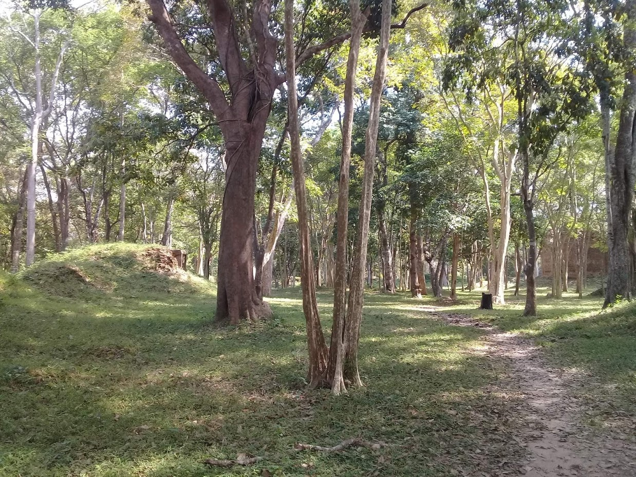 forest in Cambodia